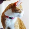 Collier Pop Cat